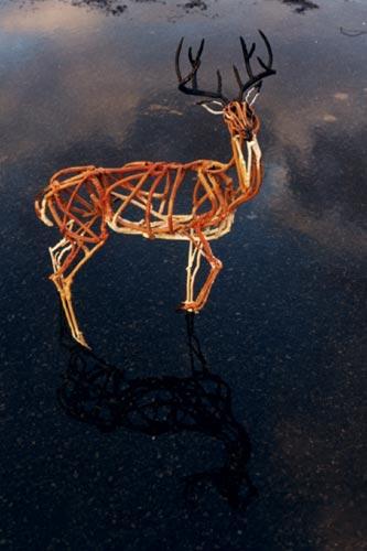 400_miniaturedeer-stag