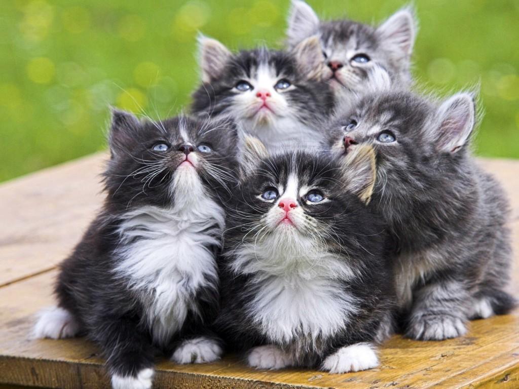 Animals_Cats_Nice_kittens_023054_