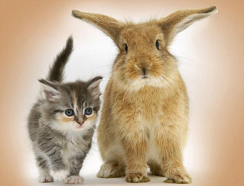 Открытка котом кроликом