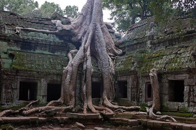 arbres-14713