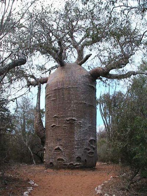 arbres-14745