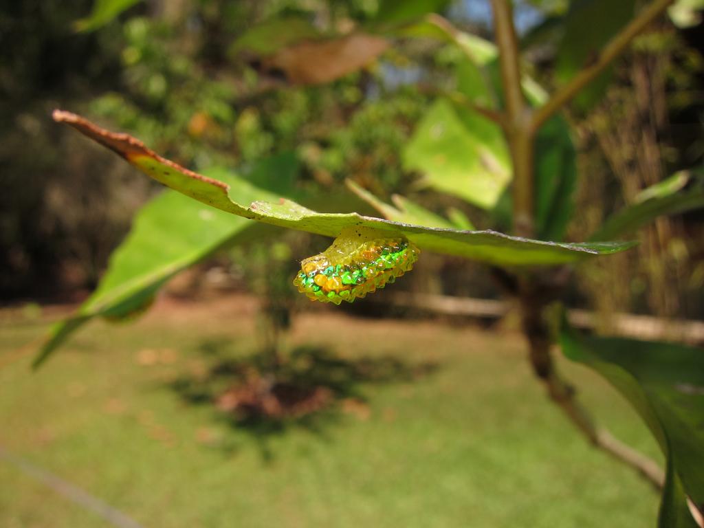 caterpillar5 (1)
