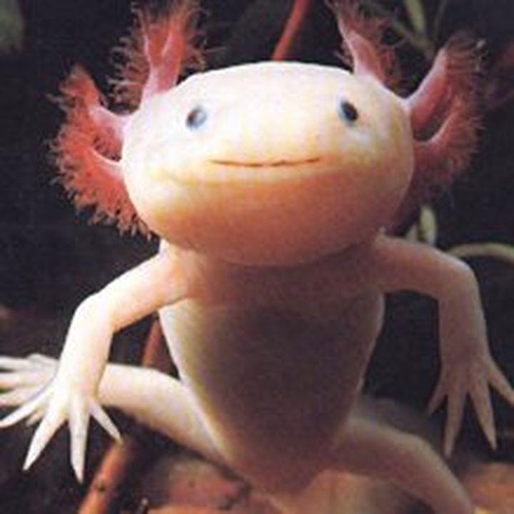 axolotl7ym