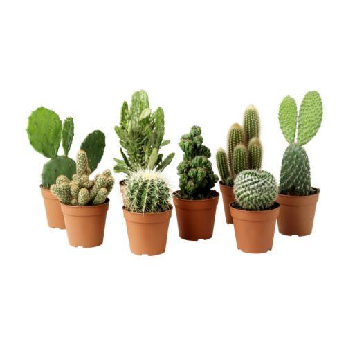 cactaceae-potted-plant__67420_PE181263_S4