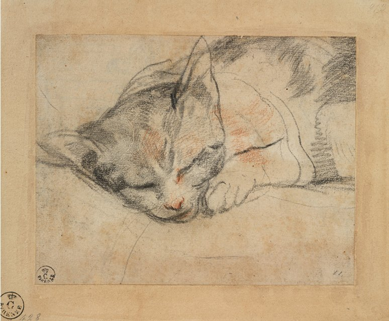 study_for_a_cat_by_federico_barocci