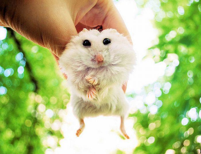 tiny_adorable_animals_30