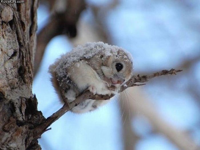 tiny_adorable_animals_15