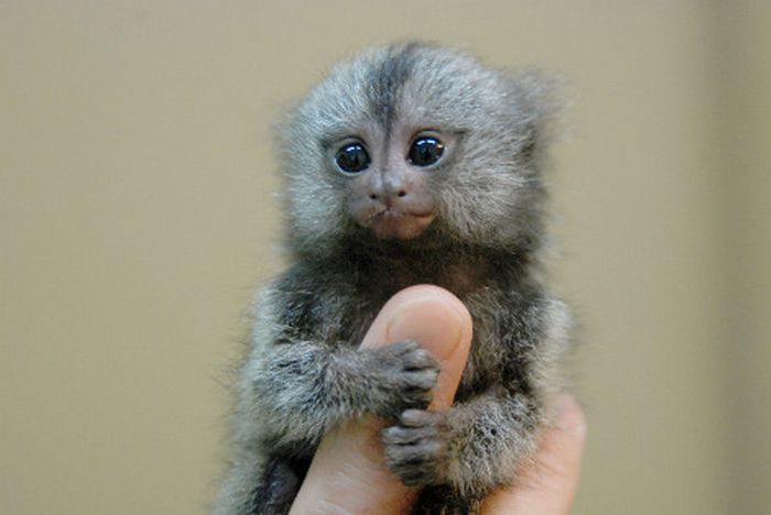 tiny_adorable_animals_22