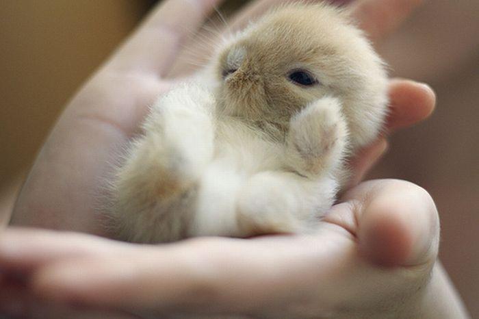 tiny_adorable_animals_02