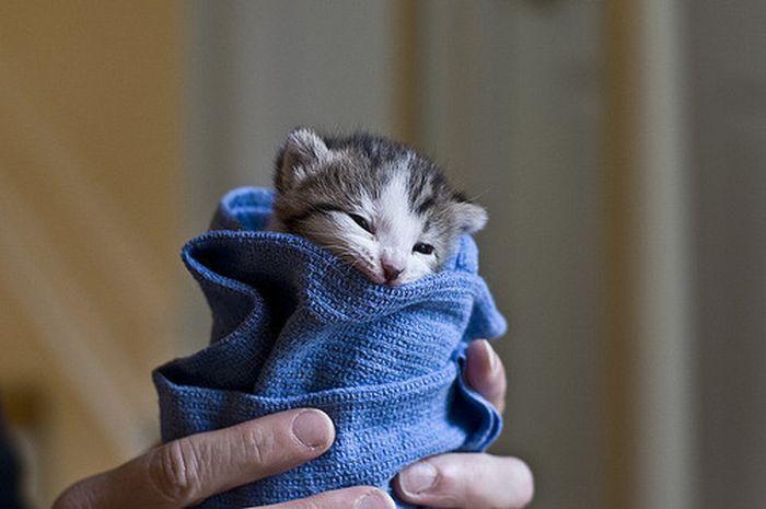 tiny_adorable_animals_03