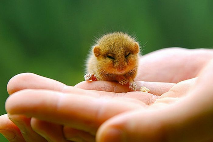 tiny_adorable_animals_09