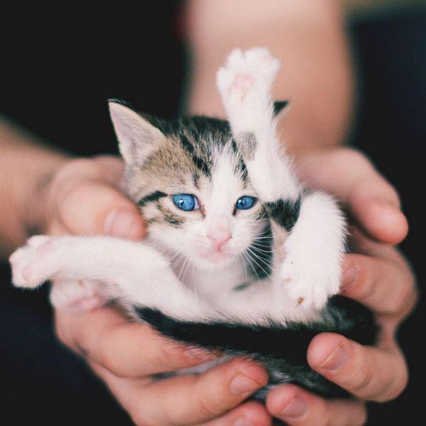 tiny_adorable_animals_12