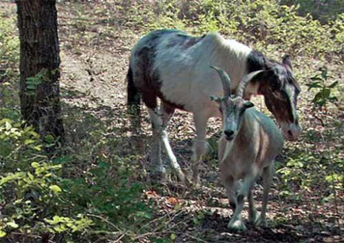 Забота-о-слепом-коне-Чарли