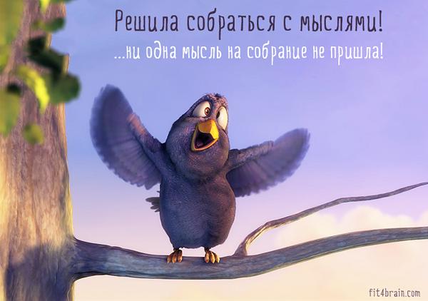 Для хорошего настроения!))) bird2