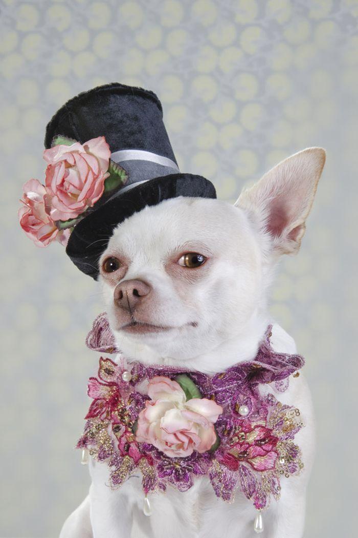 Dog_vog-3