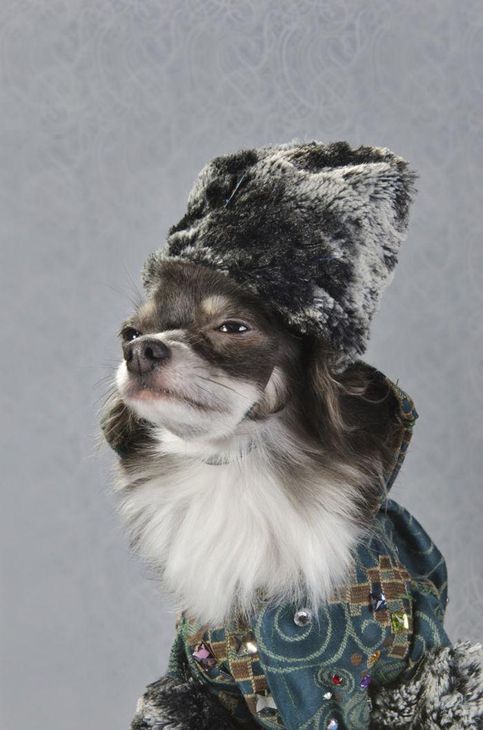 Dog_vog-15