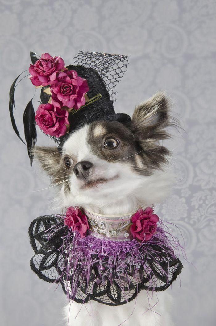Dog_vog-18