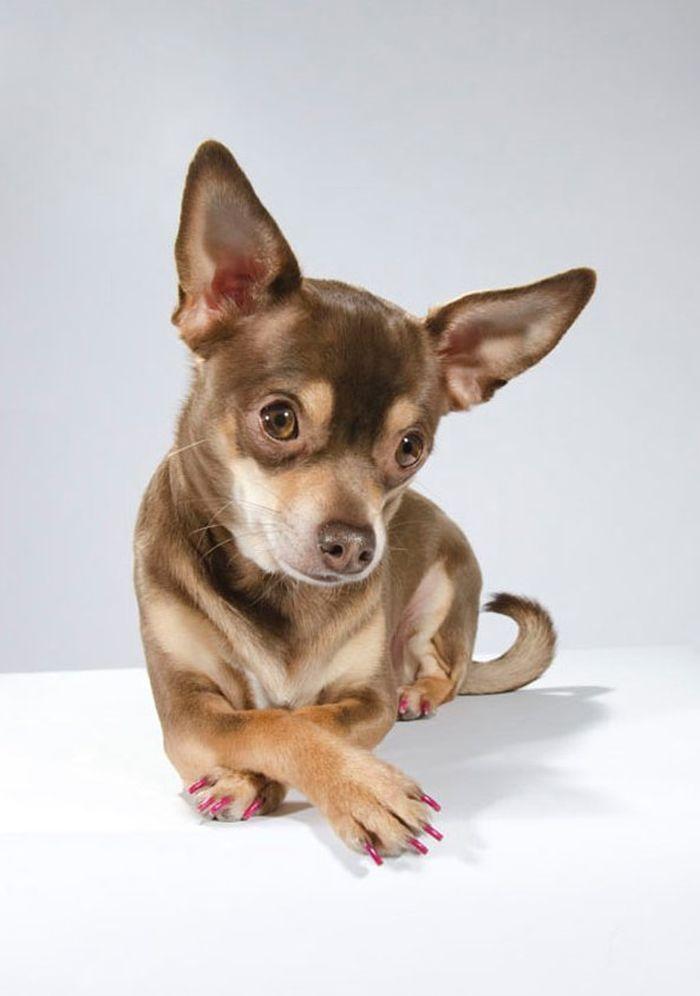 Dog_vog-4