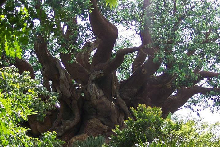 pokok1