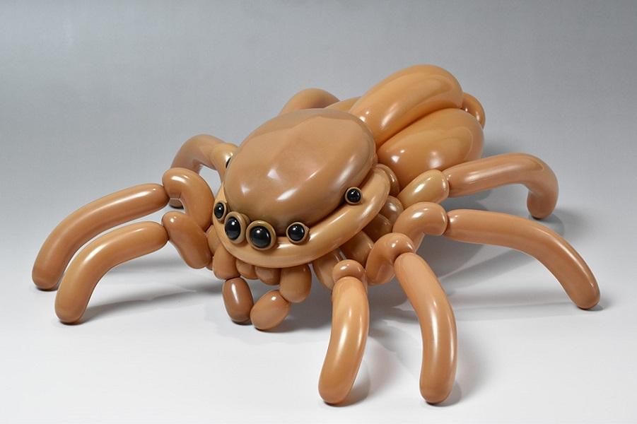 Masayoshi_jumping-spider.jpg