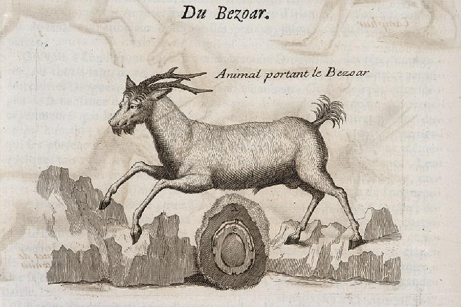 bezoar-1.jpg