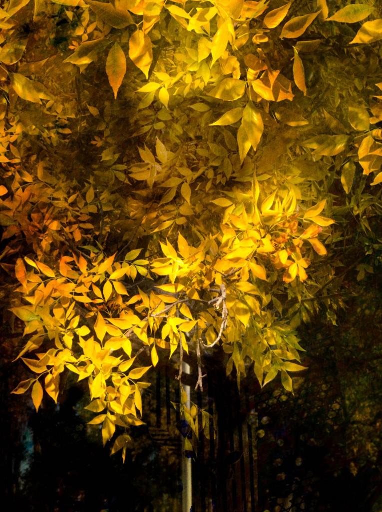 ARG-TreeWithYellowLeaves-765x1024.jpg