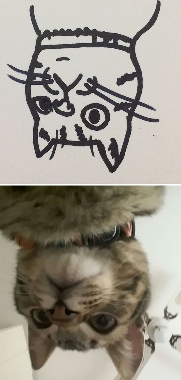 funny-poorly-drawn-cats-7-59705e71ab7e8__605.jpg
