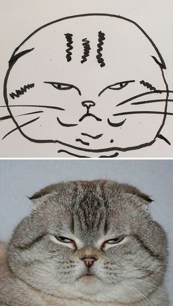 funny-poorly-drawn-cats-10-59705e77bbef5__605.jpg