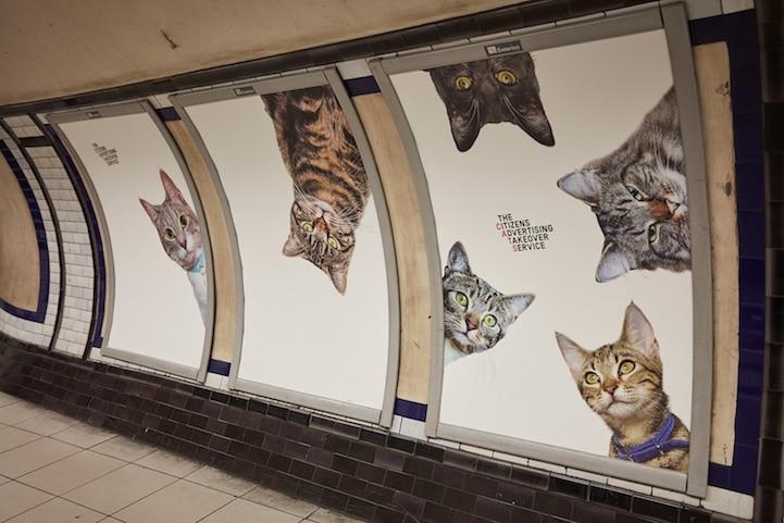cat-advertising.jpg