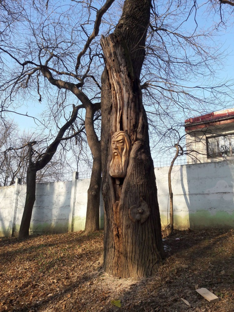 Artist-makes-art-on-tree-stumps-leaving-parks-and-public-places-more-beautiful-59e7158b941bd__880.jpg