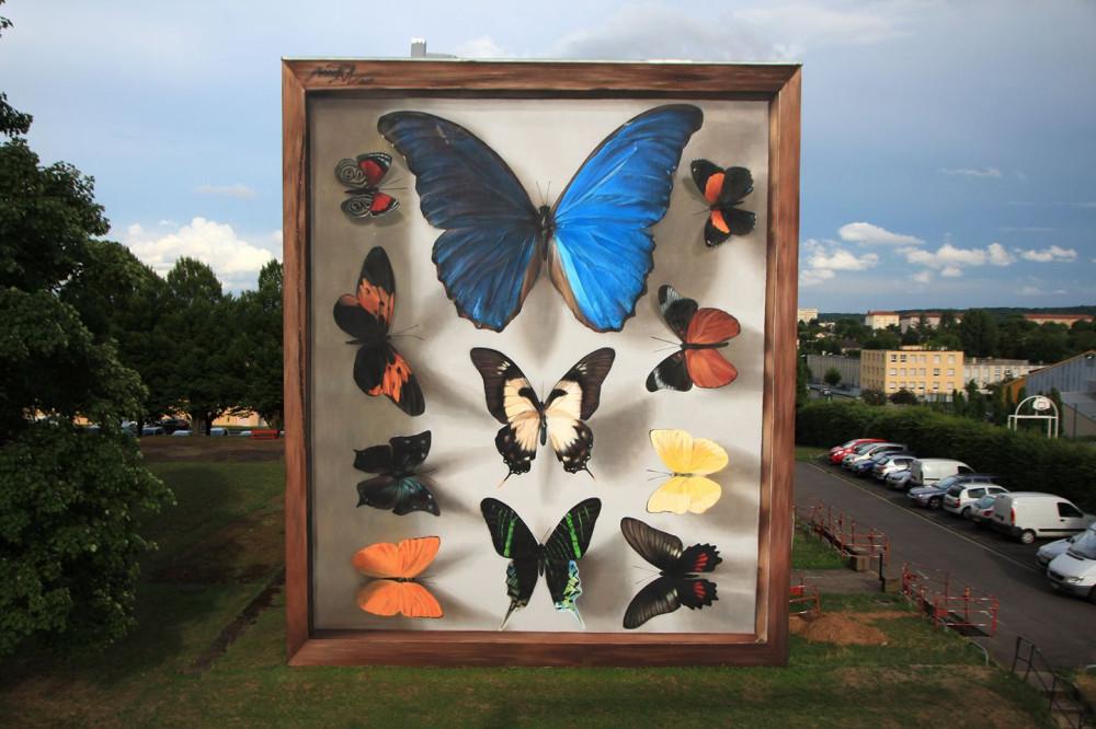 butterfly-4.jpg