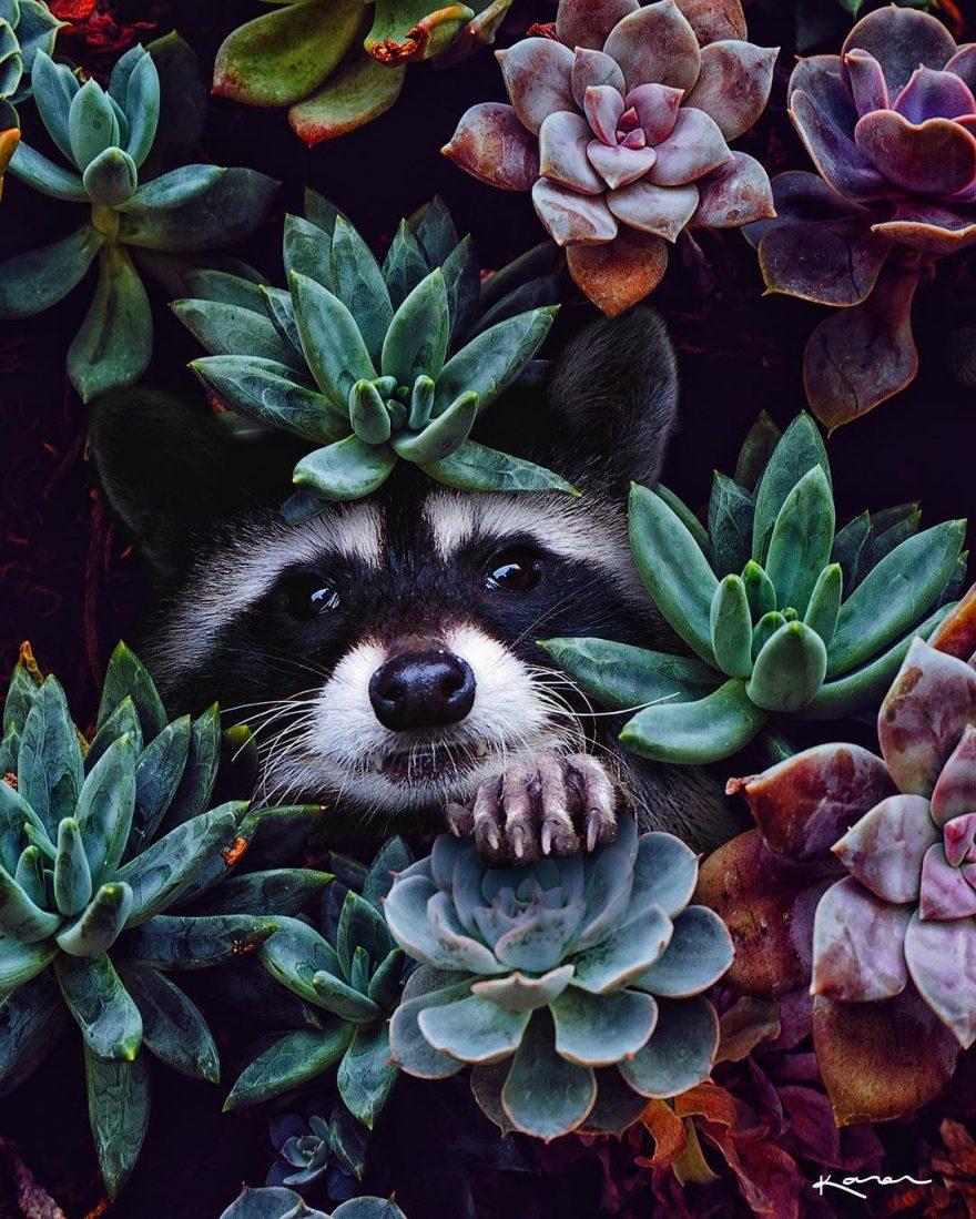 Сюрреалистичные животные. Карен, Животные, Мексика, всегда, частью, коллажей, манипуляций, цифровых, НуэвоЛеон, Монтеррее, талантливый, Канту, фотографсамоучка, цифровой, художник, визуальный, живет