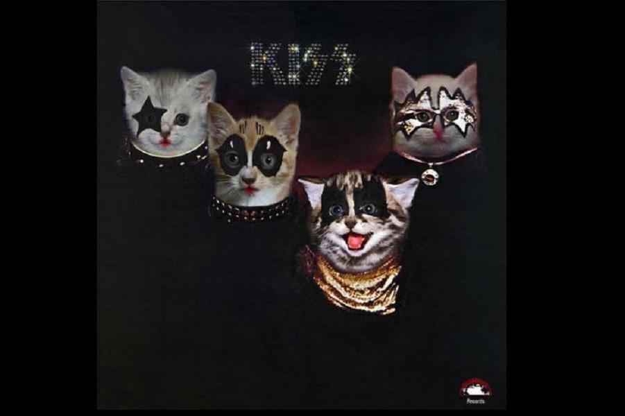 Лапа кошки на обложке