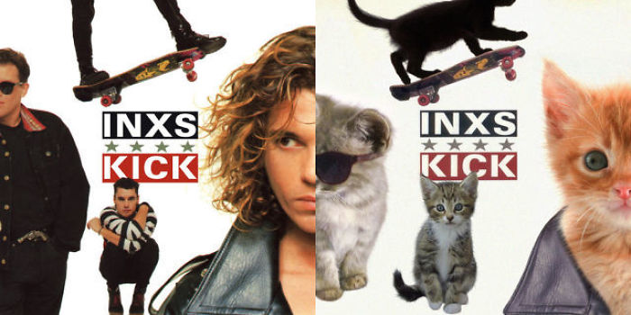 Kitten-Inspired-Album-Art-22-5a2c87d6a29e5__700.jpg