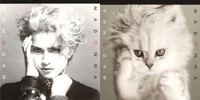 Kitten-Inspired-Album-Art-23-5a2c87d8dbdaf__700.jpg