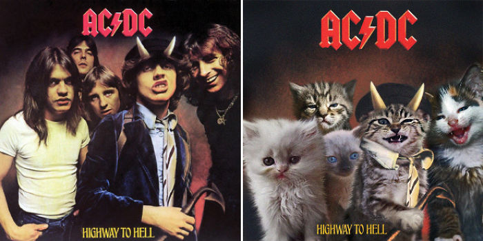 the-kitten-covers-1-5a2c850a71377__700.jpg