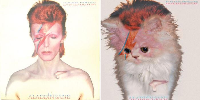 the-kitten-covers-2-5a2c84bb6252f__700.jpg