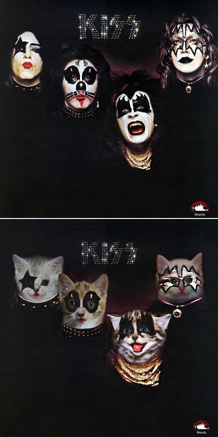 the-kitten-covers-3-5a2c85243d1eb__700 (1).jpg
