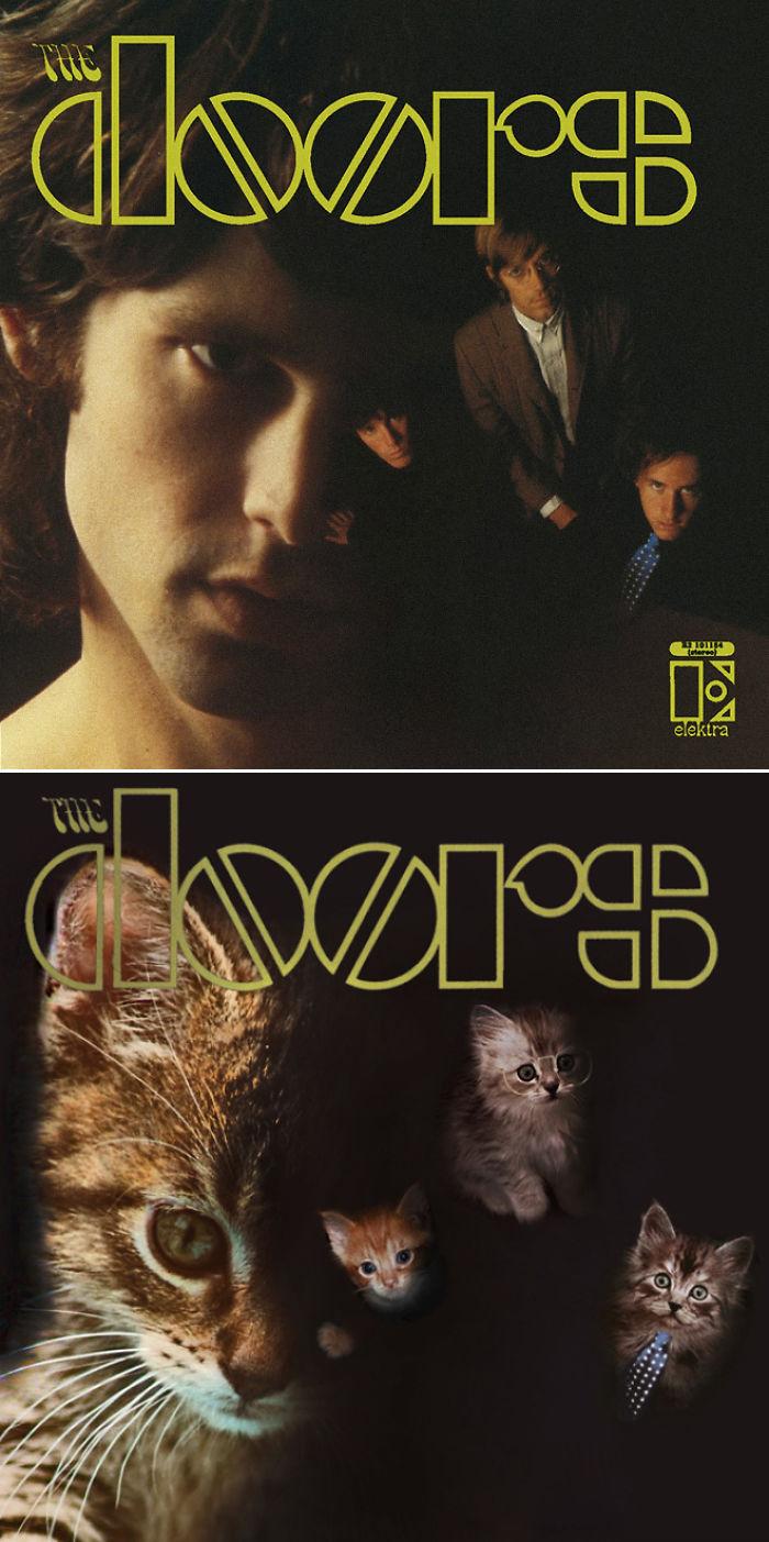 the-kitten-covers-16-5a2c8577d9f44__700 (1).jpg