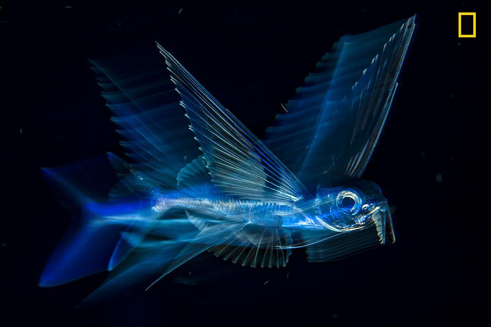 NGNP-3rdPlace-Underwater.jpg