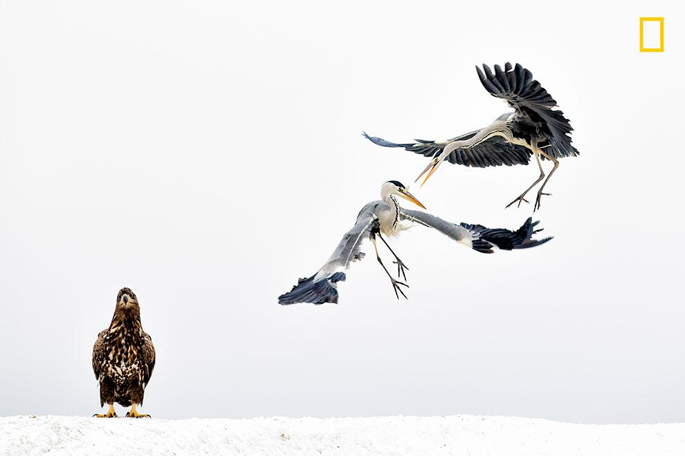 NGNP-3rdPlace-Wildlife.jpg