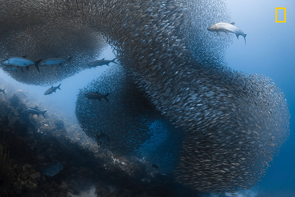 NGNP-HonMen1-Underwater.jpg