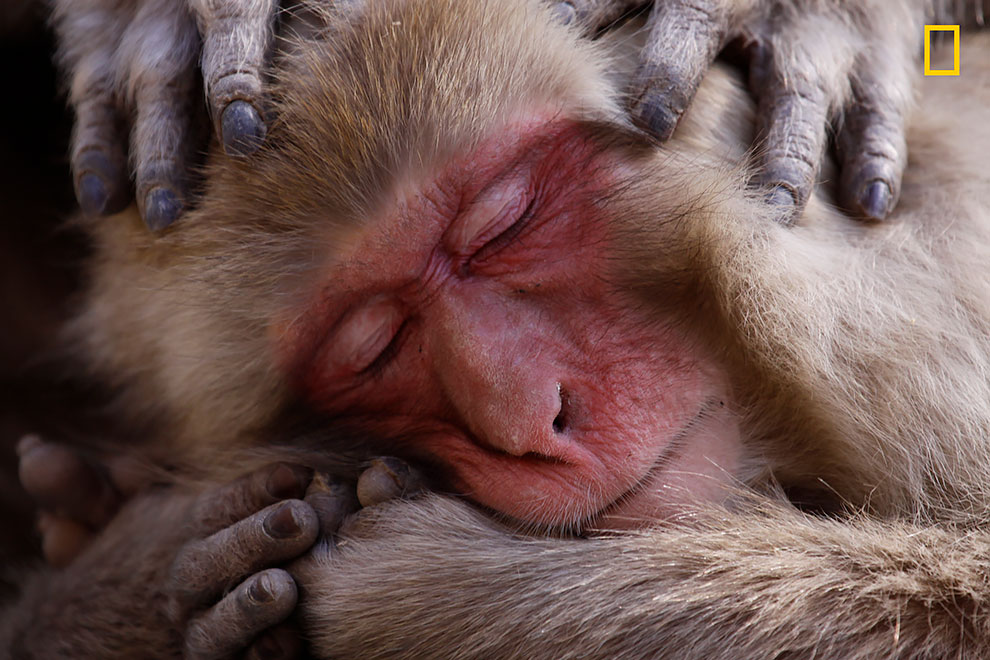 NGNP-HonMen-Wildlife.jpg