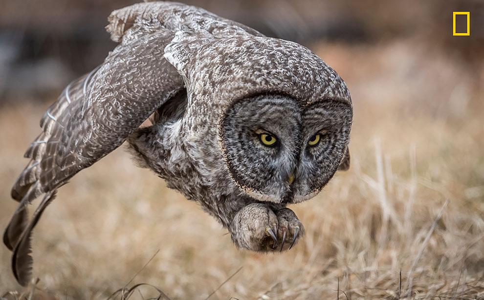 NGNP-Wildlife-PeoplesChoice.jpg