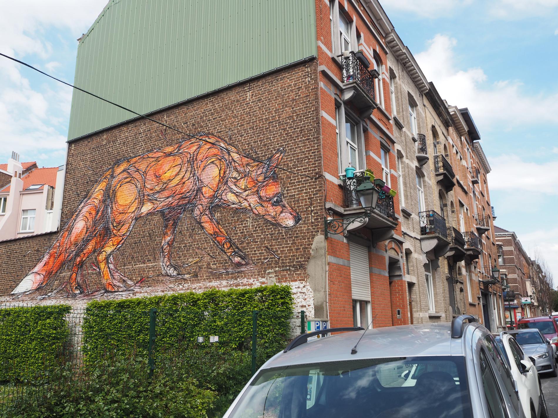 dzia-fox-2.jpg