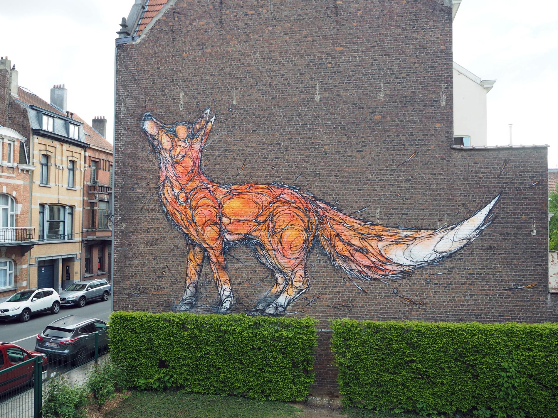 dzia-fox-3.jpg
