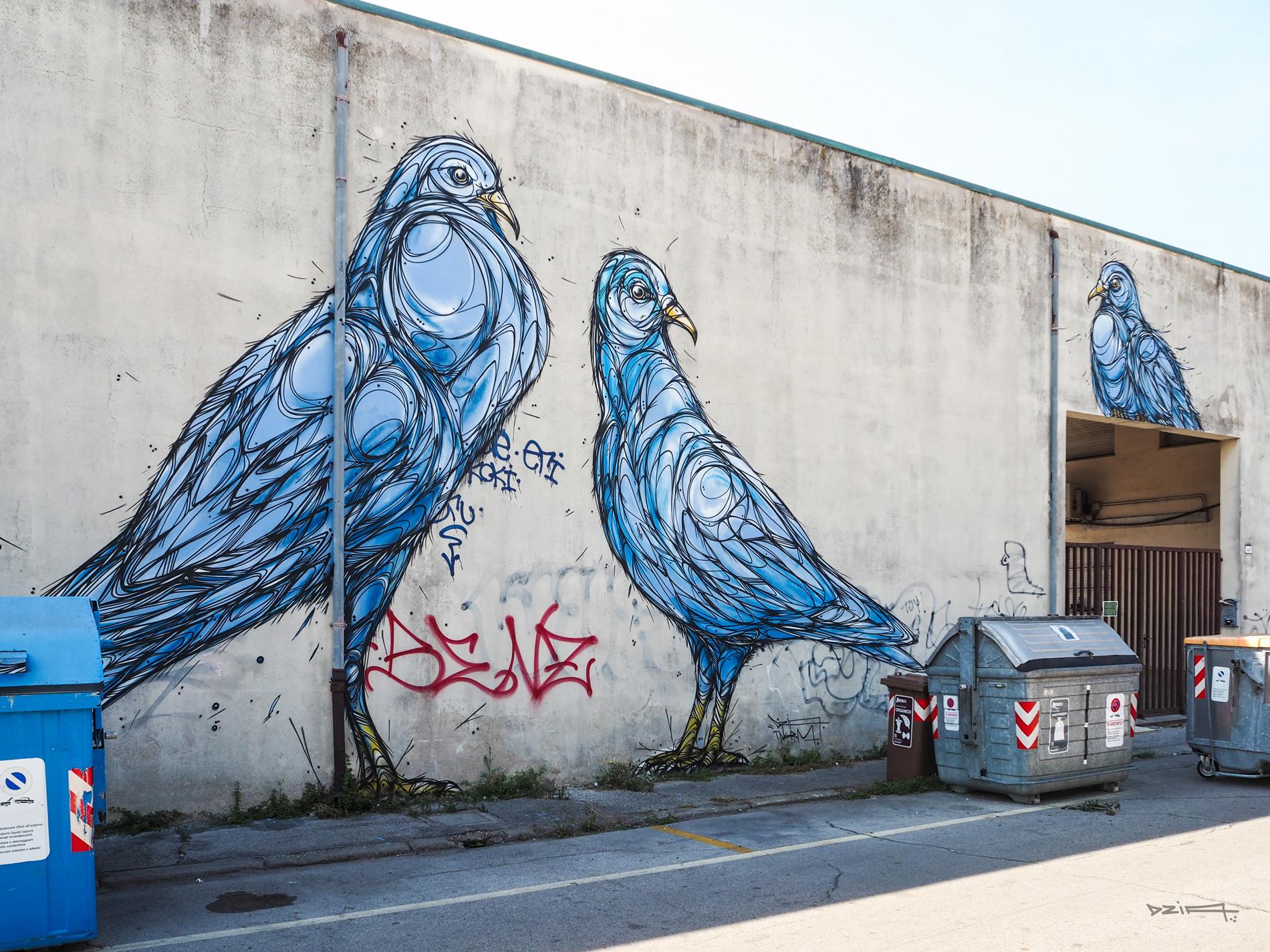 dzia-pigeon.jpg