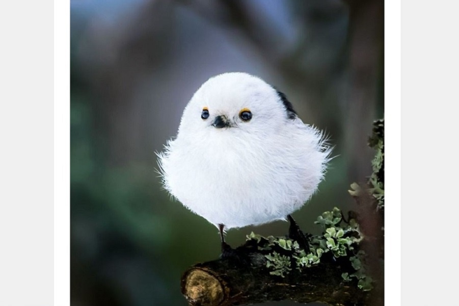 Финский фотограф снимает живых Angry Birds, и невозможно в них не влюбиться