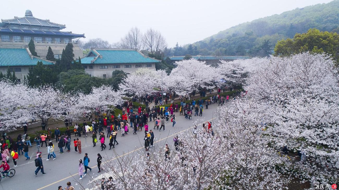 flores_cerejeira_china_2018_02.jpg