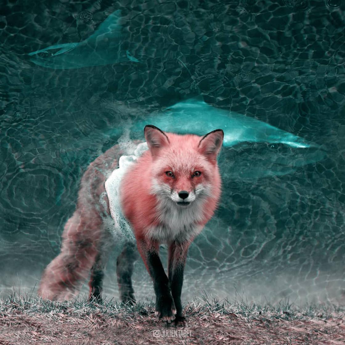 animaux-fantastiques-julien-tabet-6.jpg